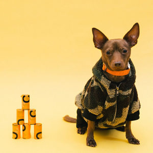 Pet clothes and Accessory